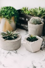 Small wonders: Succulents